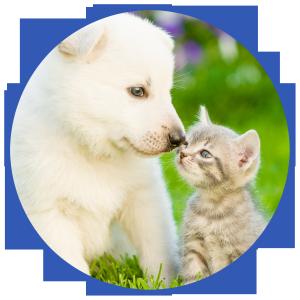 Pets Circle